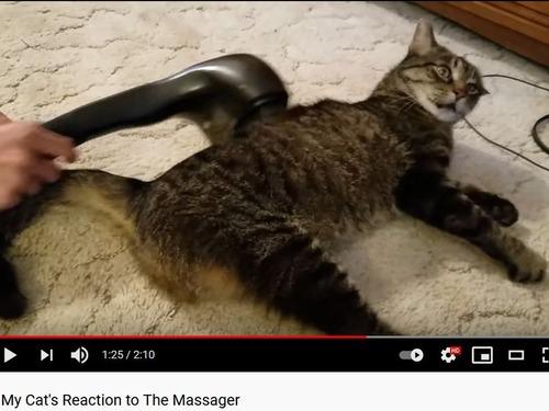 マッサージ器が好きな猫