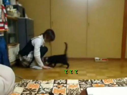 変な遊び方の猫01