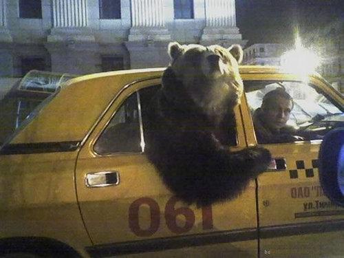 ロシアのクマ13