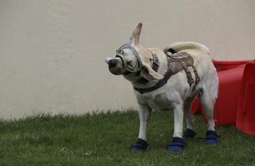 メキシコ地震で52人を救った犬06