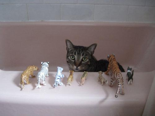 密談する猫たち10