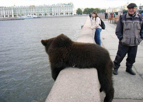 ロシアのクマ05