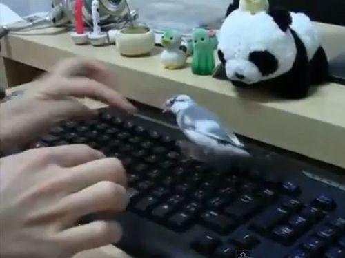 キーボードを打たせてくれない鳥01
