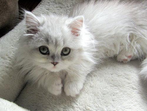 帰宅したら…見知らぬ猫がいる12