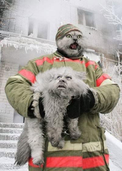 デンマークで救済された猫VSロシアで救済された猫01