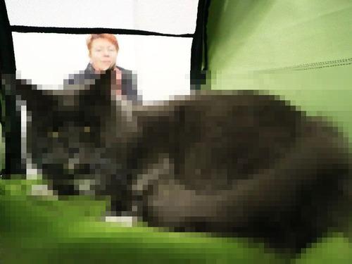 ウクライナのでっかい猫コンテスト00