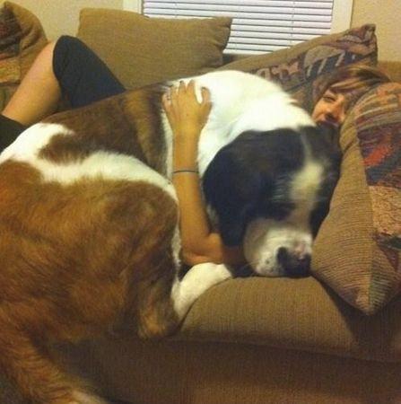 大きな犬のトラブル12