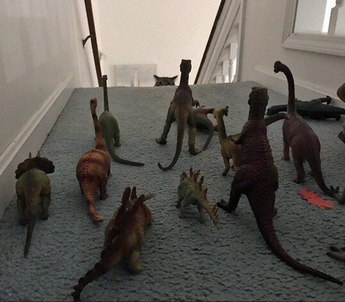 猫を2階に上げない方法01