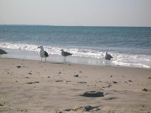 砂浜で失くした婚約指輪、宝探しグループが見つける00