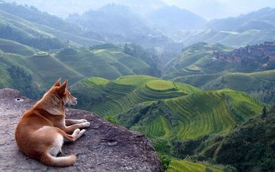 絶景を見下ろす犬01