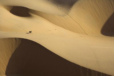 まるでゲーム画面のように真上から見下ろしたアフリカの写真02