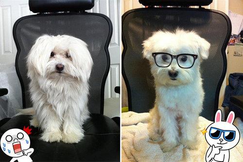 犬のヘアカット01