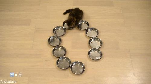 猫10匹が並んで食事05