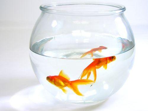 金魚の正式な弔い方00
