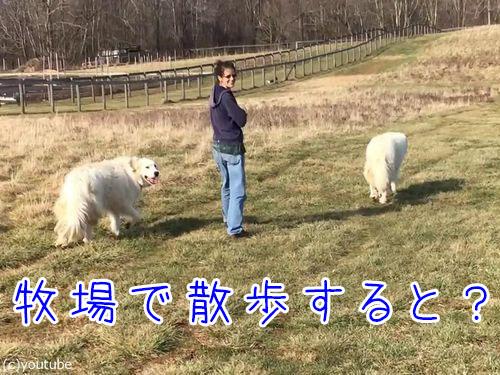 農場で動物と散歩00