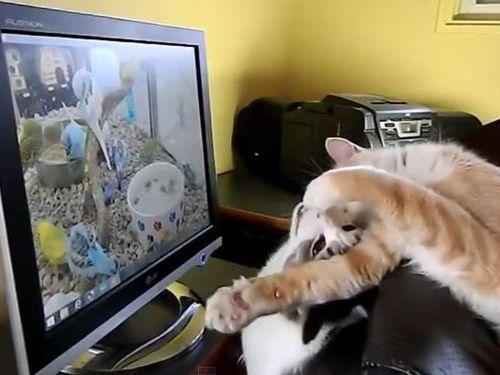 猫のモニタ画面・攻防戦05