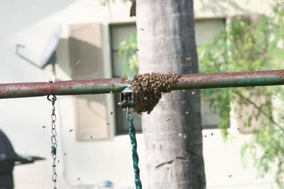 「家にハチの巣が…」素人が繰り広げたムチャな死闘10