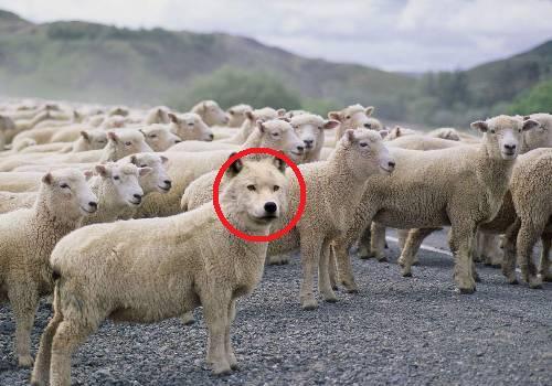 羊飼いの楽しみ03