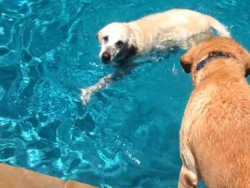 泳ぎの達者な犬とそうでもない犬01