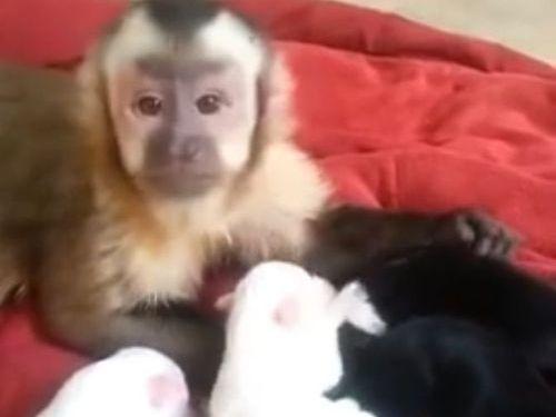 サルと子犬01