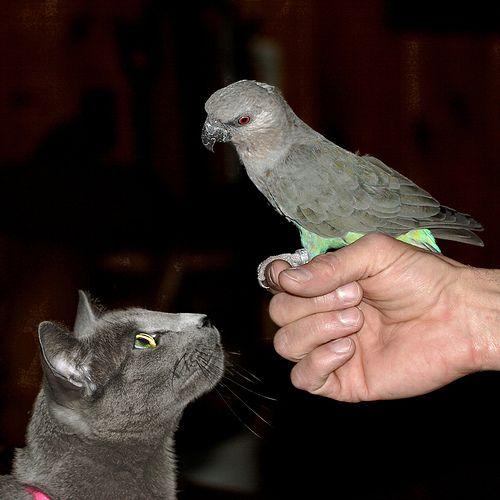 インコと猫05