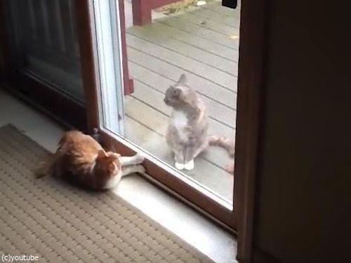 ハイテンションの猫と冷静な猫03