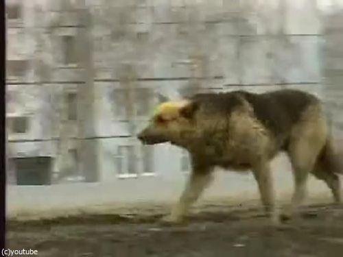 ロシア版の忠犬ハチ公01