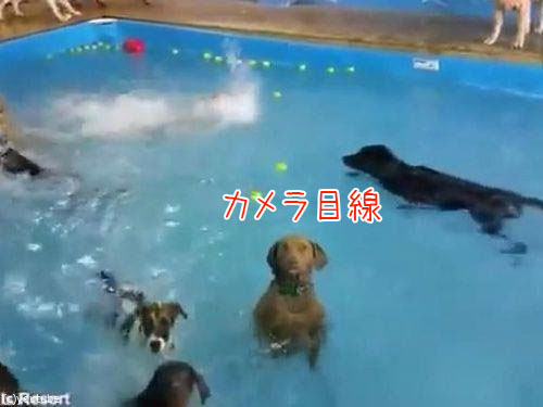 カメラ目線の犬01