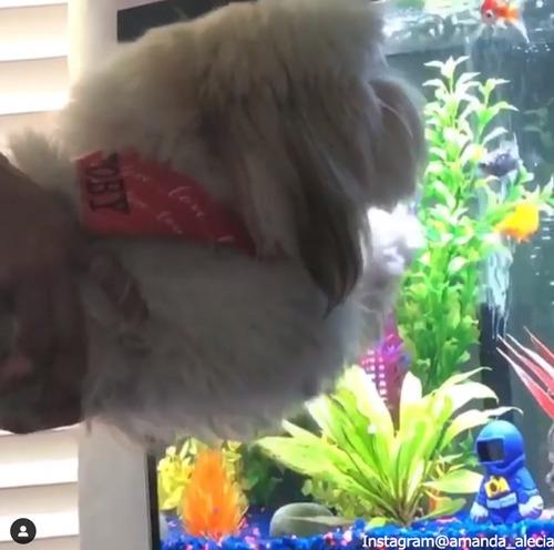 愛犬に水槽を見せたら…03