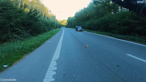 高速道路で子猫を救出03