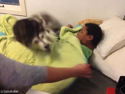 ご主人様を起こすのは家族でも許さない犬05