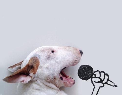 愛犬と10倍楽しむ方法05