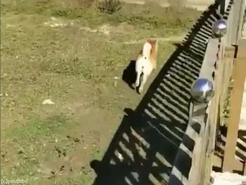 柵の意味がない犬00