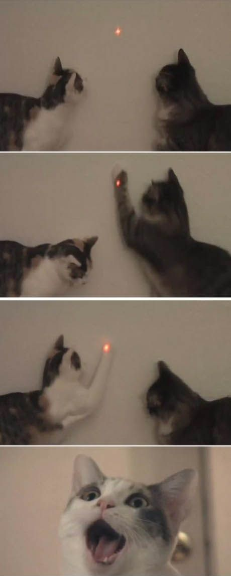 食洗機と猫05