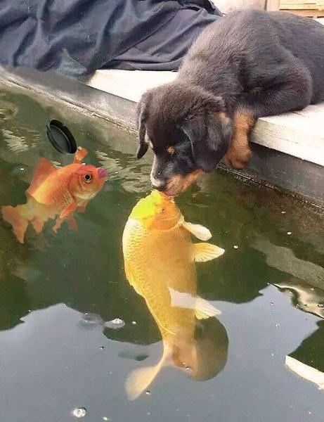 犬と魚の愛情09