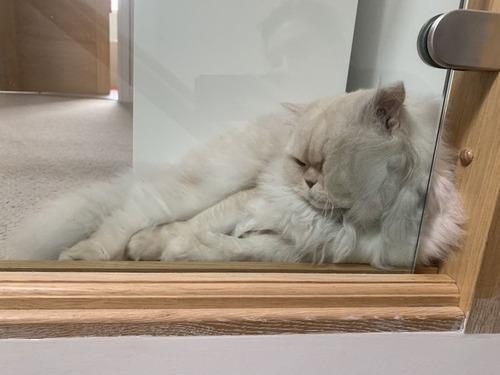 ガラスの上の猫05