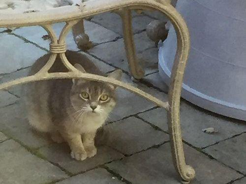 野良猫が家族以上の存在に01