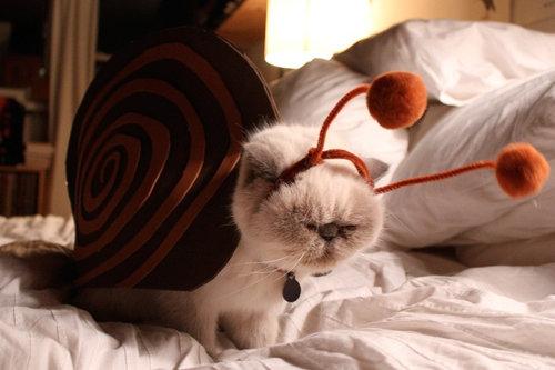 前世は別の動物だったであろう猫06