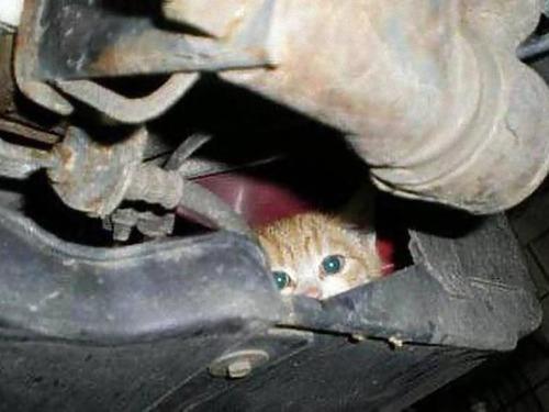 車の中にいる動物00