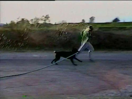 ホースと犬02