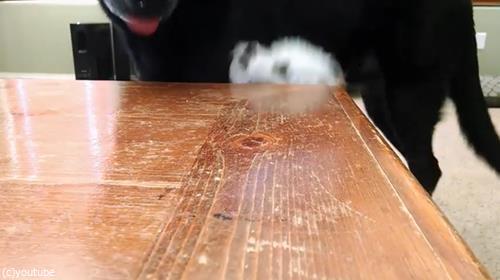 スナック食べたい犬05