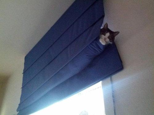 猫は見ている07