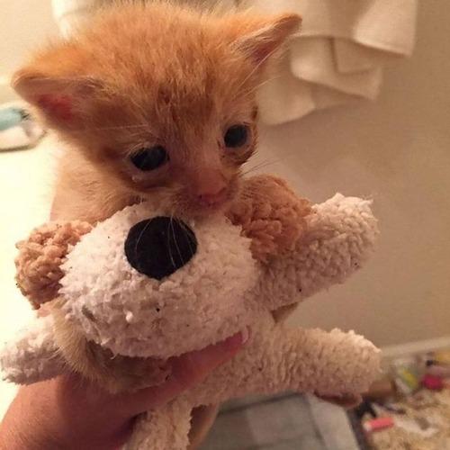 子を亡くした母猫と親を亡くした子猫01