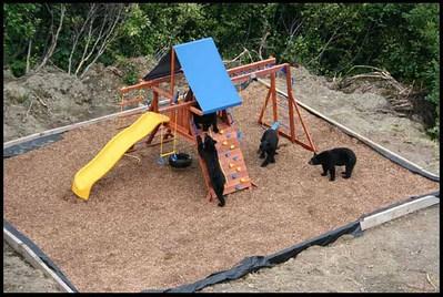 庭に遊び場を作ったら…クマさんが…喜んで遊んでた03