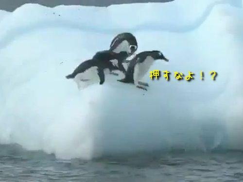 遊ぶペンギン