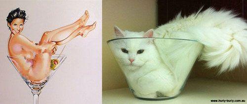 猫のポーズ03