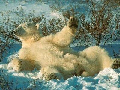 白クマのダンス00