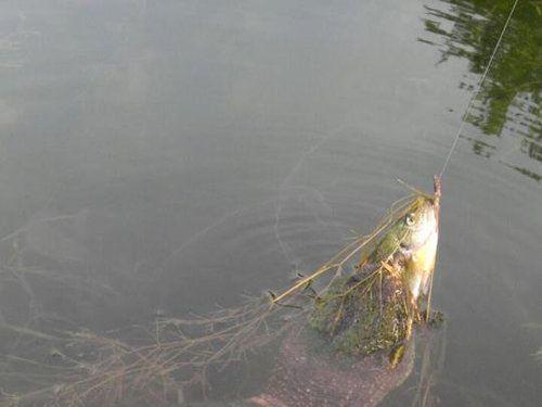 魚を釣ったら突然02