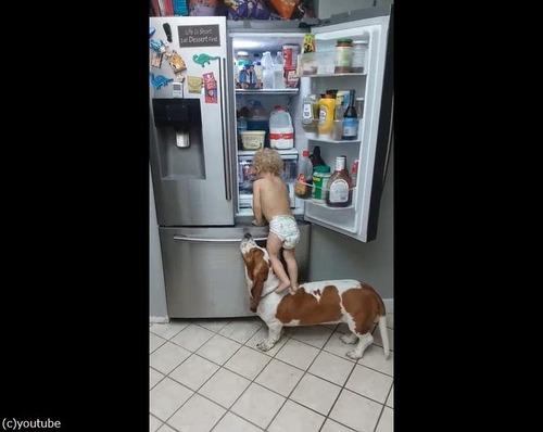赤ちゃんを助ける犬03