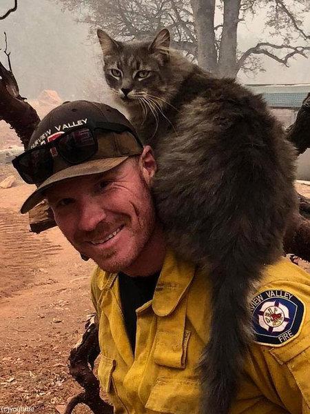 山火事から救出された猫02
